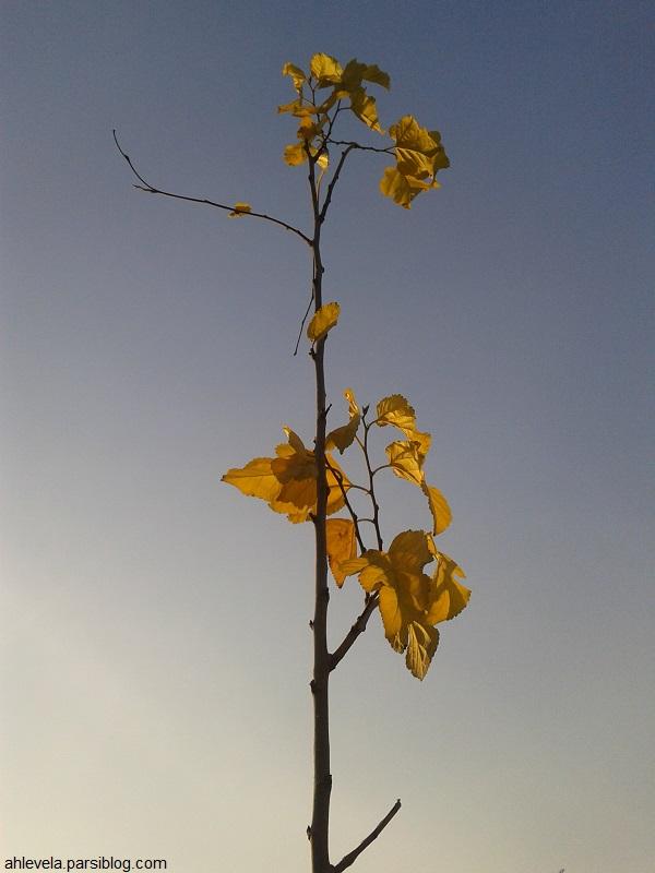 نهال پاییزی