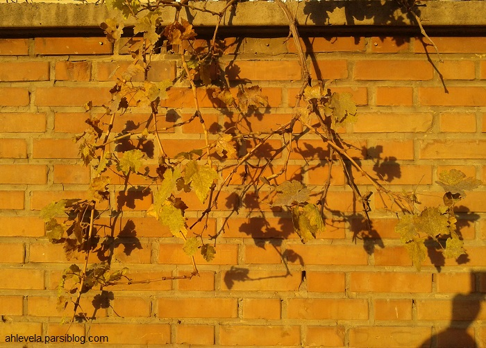 برگ های پاییزی