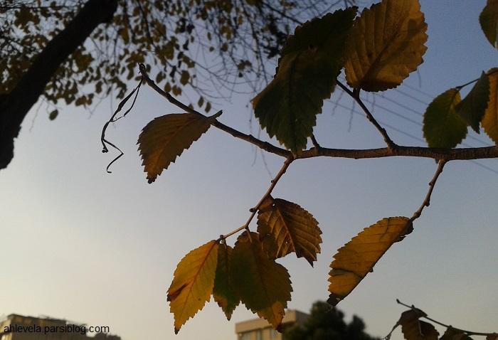 پرگ های پاییزی
