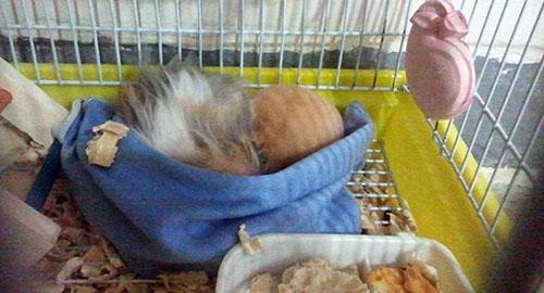 محل خواب همستر