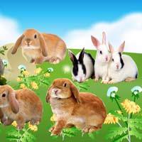 دانلود فایل لایه باز خرگوش