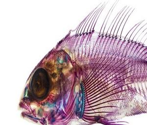 هنر عکاسی: تصاویر تحسینبرانگیز از درون ماهیها