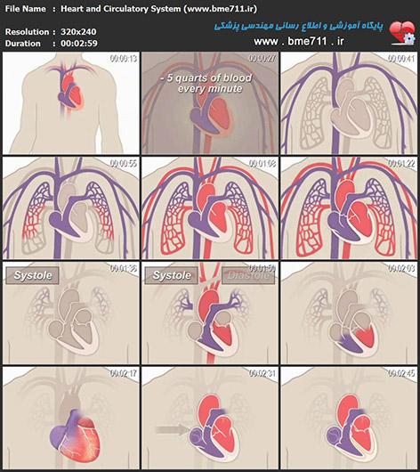 ویدیوی آموزشی فیزیولوژی قلب و سیستم گردش خون