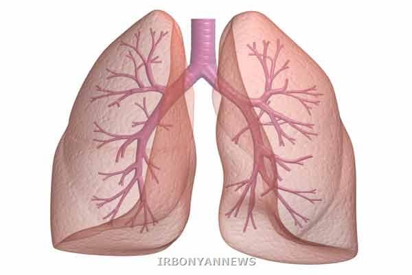 ساخت سلولهای ریه با تکنولوژی سلول های بنیادین