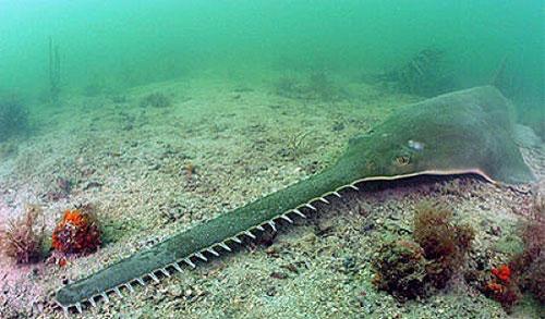 مطالب داغ: ترسناکترین قاتلان ناشناخته دریا