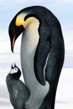 دانلود مستند رژه پنگوئن ها