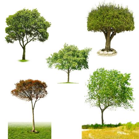 لایه باز درخت