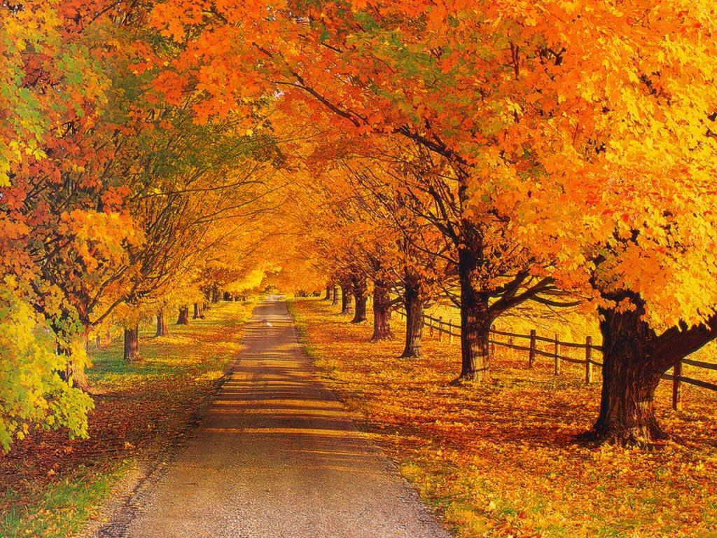 عکس خزان-پاییز بوی ماه مدرسه