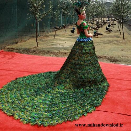 زیبا ترین لباس عروس که از پر طاووس درست شده   عکس