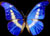 http://s5.picofile.com/file/8111520376/blue_butterfly_0.jpg