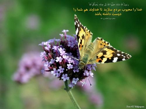 http://s5.picofile.com/file/8111810576/www_hidaj_yic_ir_75.jpg