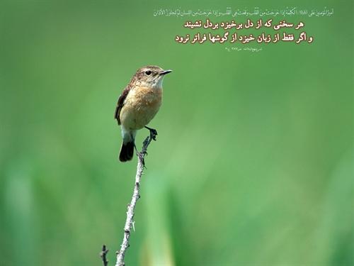 http://s5.picofile.com/file/8111817800/www_hidaj_yic_ir_76.jpg