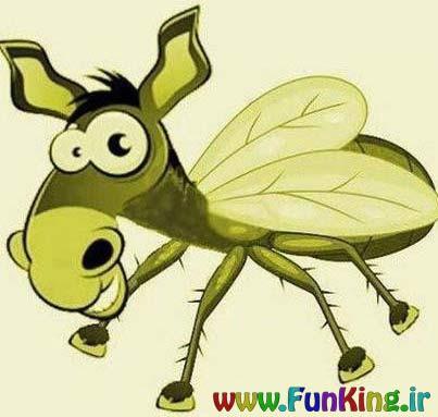 معرفی می کنم، ایشون خرمگس هستن!