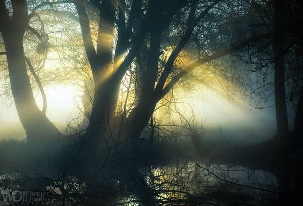 مثل لزوم نور برای درخت ها