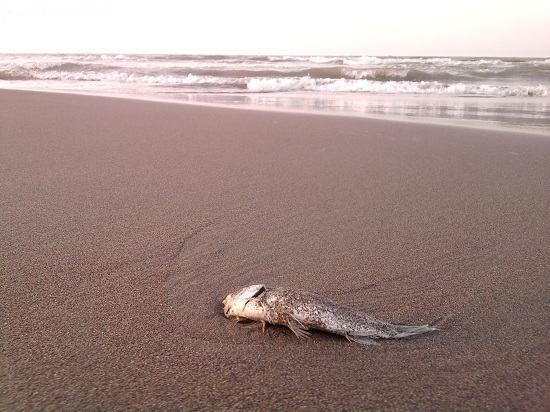 ماهی تو جان سپرده روی خاک