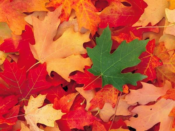 شبیه برگ پاییزی ، پس از تو قسمت بادم