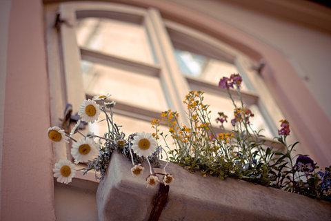 این پنجره عمریست به پای تو نشسته است