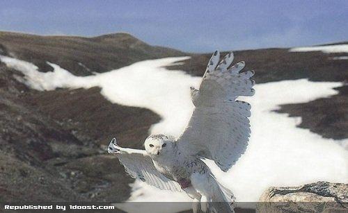مطالب داغ: 5 پرنده زیبا اما قاتل در دنیا