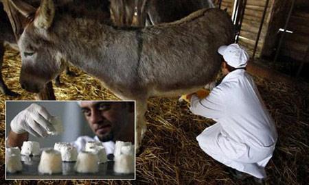تغذیه: خواص انواع شیر روی انسان
