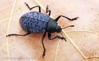 دانلود پاورپونت کتاب جانور شناسی:  با موضوع: جانور شناسی  (حشرات و خارپوستان)
