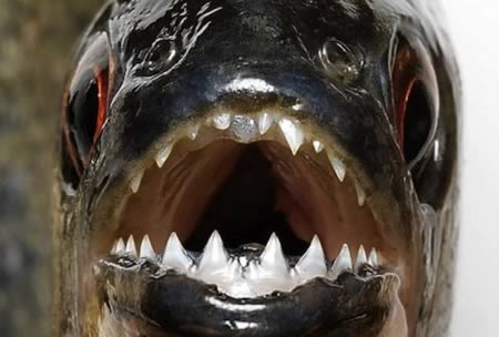 مطالب داغ: عجیبترین دندانها در میان حیوانات