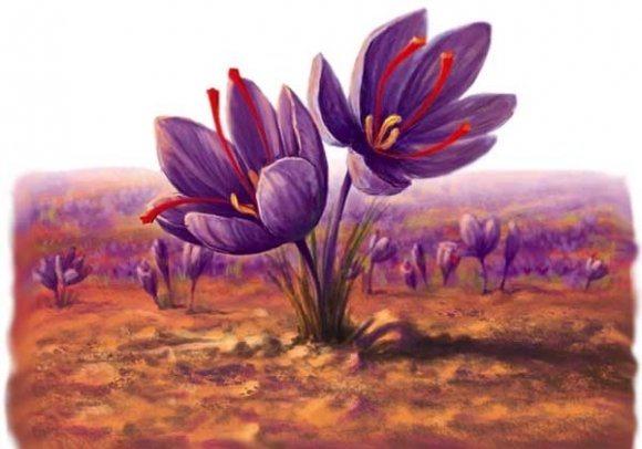 بهداشت و زیبایی: با زعفران زیبا تر شوید