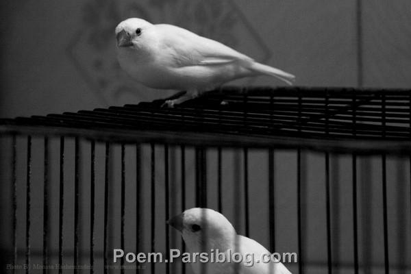 نشو پرنده ی خوبم به این قفس در بند