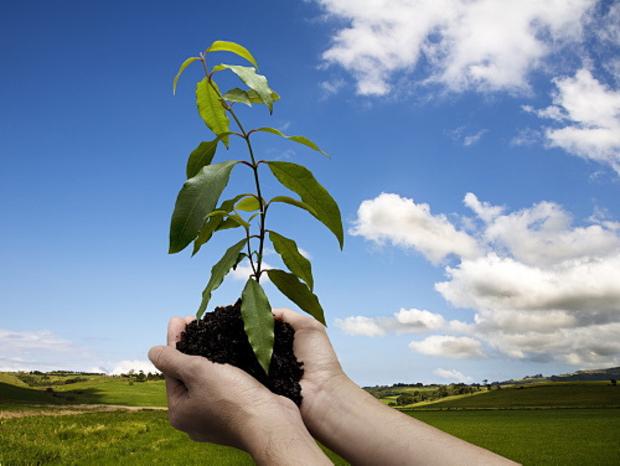 روز درختکاری مبارک ツ