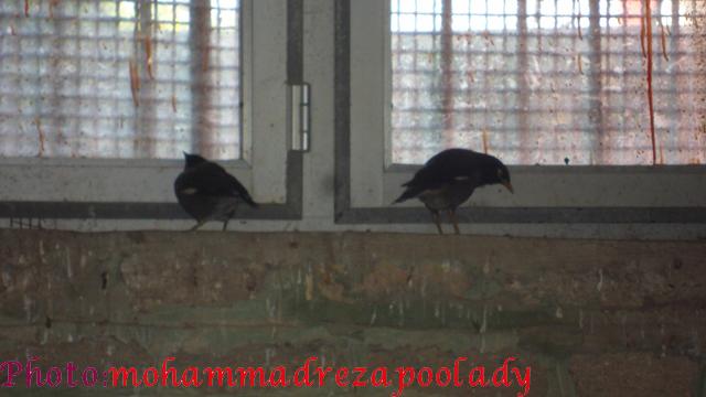 http://s5.picofile.com/file/8115939476/SAM_0025.jpg