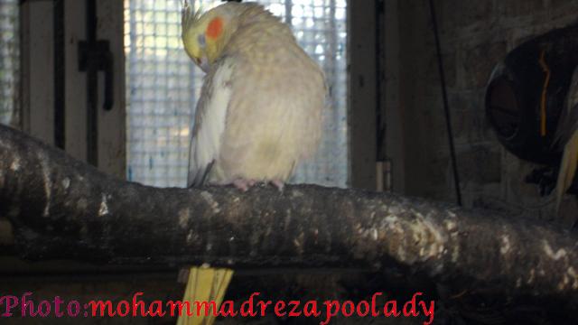 http://s5.picofile.com/file/8115939884/SAM_0037.jpg