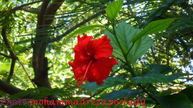 http://s5.picofile.com/file/8115940076/SAM_0053.jpg