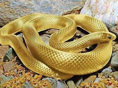 قابل توجه خانمهای محترم! زیباترین گردنبند دنیا از طلای 24 عیار!!!