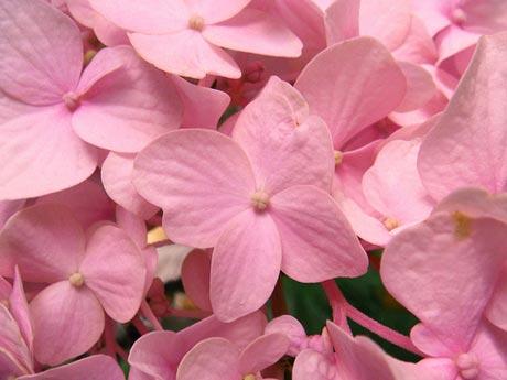 http://s5.picofile.com/file/8116108968/spring_flower.jpg