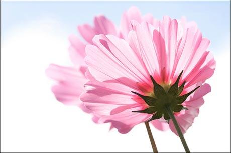 http://s5.picofile.com/file/8116108976/spring_flower1.jpg