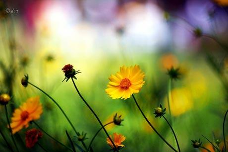 http://s5.picofile.com/file/8116108992/spring_flower2.jpg