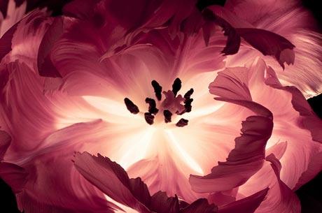 http://s5.picofile.com/file/8116109026/spring_flower3.jpg