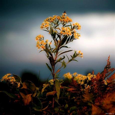 http://s5.picofile.com/file/8116109076/spring_flower5.jpg