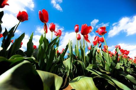 http://s5.picofile.com/file/8116109092/spring_flower6.jpg