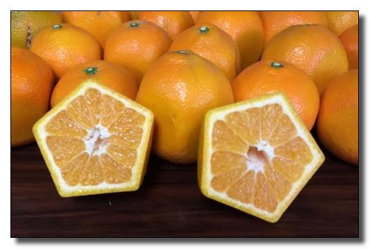 عکس نارنگی ژاپنی