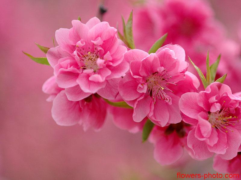 زیباترین شعرهای عاشقانه بهار