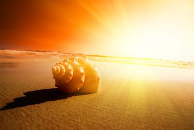 عکس + تولد دوباره + ساحل + حلزون + تابش خورشید + کیفیت عالی + Snail + sunshine + hd