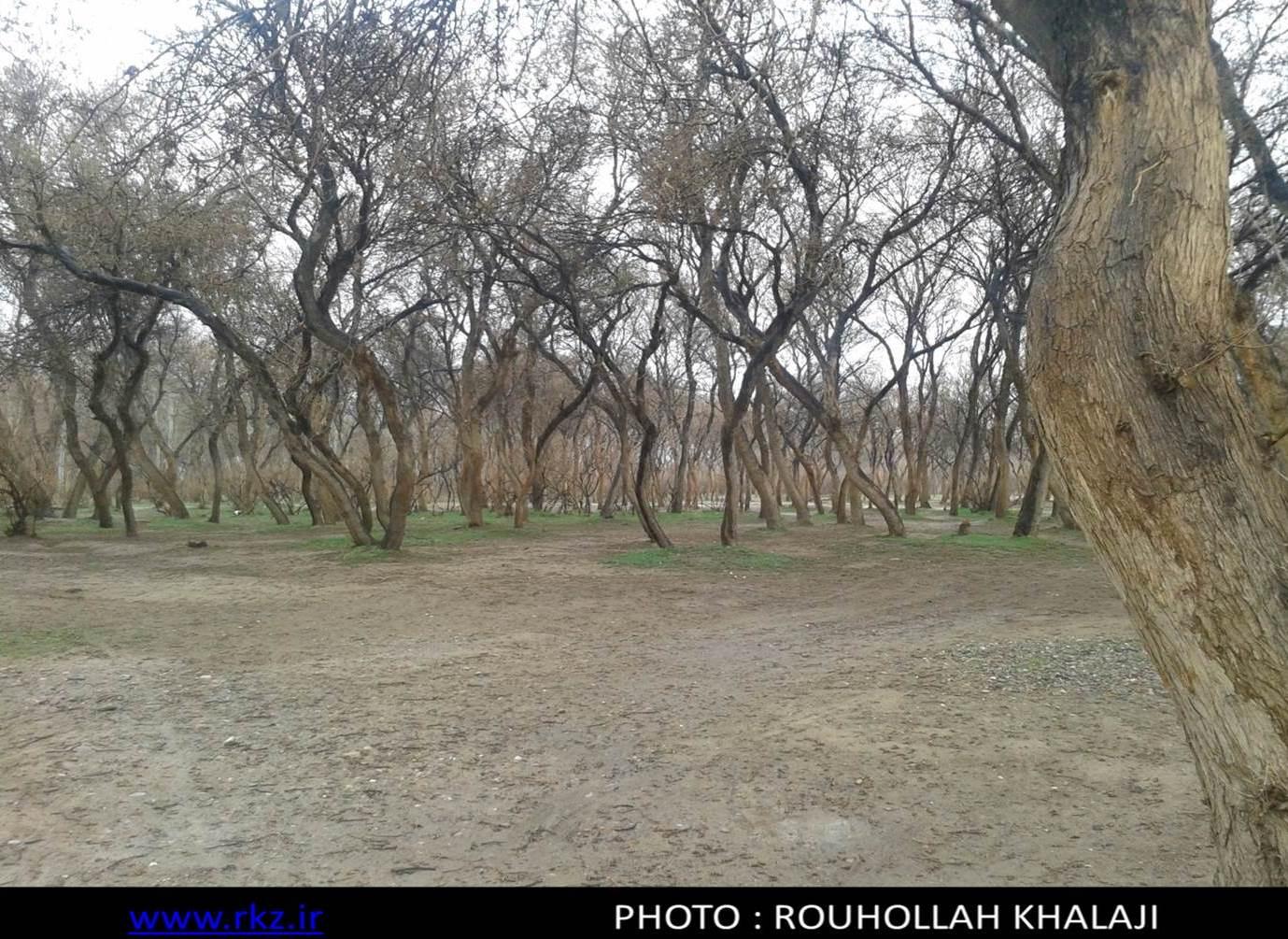 طبیعت افغانستان