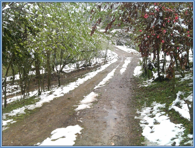 برف در کوچه پس کوچه های نوروز محله