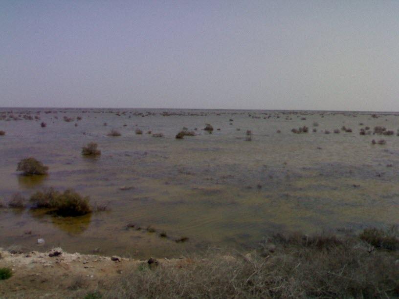 33  یادمان شهدای هور ، مقتل شهید علی هاشمی ، جزیره مجنون