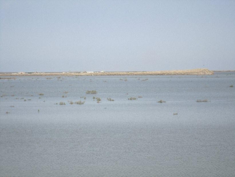 103  یادمان شهدای هور ، مقتل شهید علی هاشمی ، جزیره مجنون