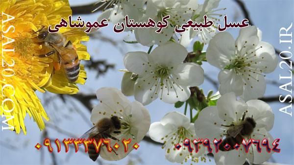 خرید و فروش عسل طبیعی خالص مرغوب ناب اصل کوهستان عموشاهی