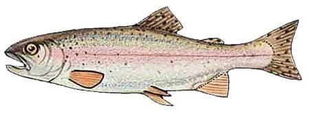 دانلود پاورپونت روش های نوین  پرورش ماهی  و انواع مزارع پرورش ماهی