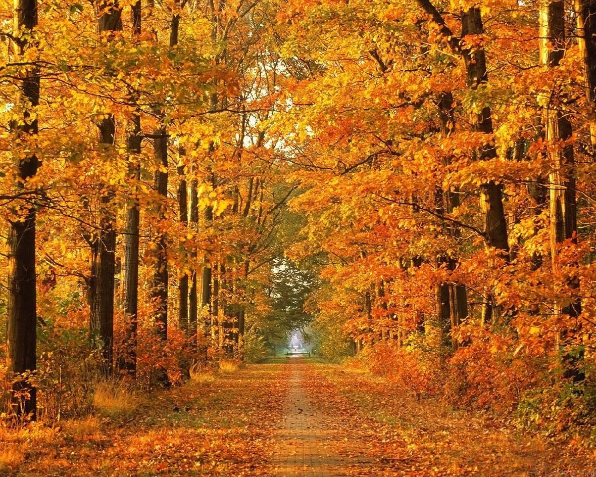http://s5.picofile.com/file/8119896576/imagesalbum_blogsky_com.jpg