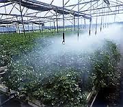 ارائه راهکارهای کاربردی در مصرف بهینه آب کشاورزی با روش گلخانه ای