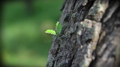 + طبیعت + عکس + تولد دوباره + درخت + برگ + زندگی دوباره + کیفیت عالی + new life + leaf + hd